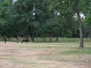 Balade moto historique le 1er juillet 2012 - thumbnail #39