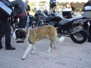 Week-end moto à Pra Loup les 22 et 23 septembre 2012 - thumbnail #72